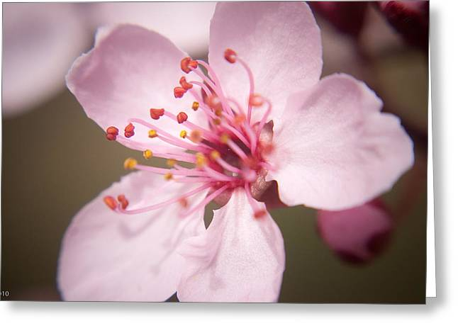 Spring Blooms 6697 Greeting Card by Timothy Bischoff