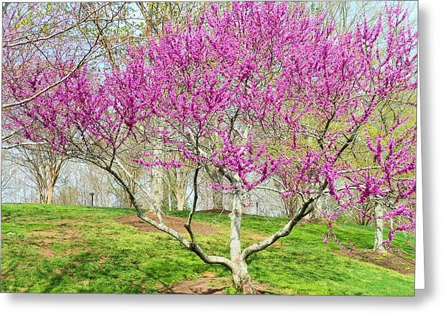 Spring Blooms Greeting Card by Kay Gilley