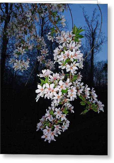 Spring Blooms Greeting Card by Otis L Stanley
