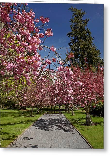 Spring Blossom, Ashburton Domain Greeting Card by David Wall