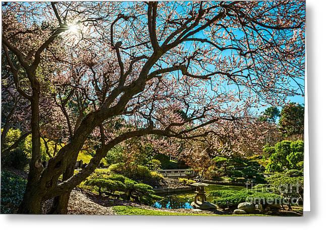 Spring Blossom Star Greeting Card by Jamie Pham