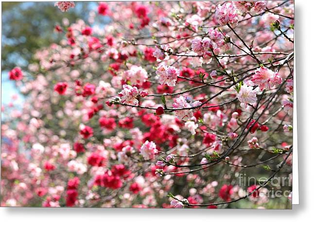 Spring Blossoms Branches Greeting Card by Carol Groenen