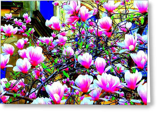 Spring Blossoms Greeting Card by Ed Weidman
