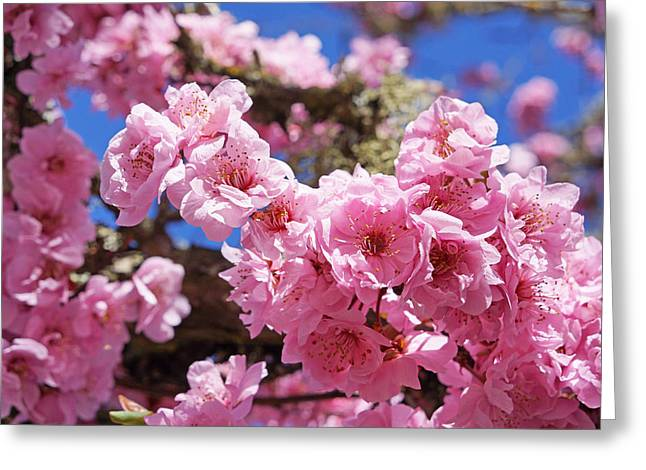 Spring Blossoms Fine Art Prints Blue Sky Tree Greeting Card by Baslee Troutman