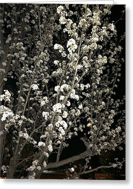 Spring Blossoms Glowing Greeting Card