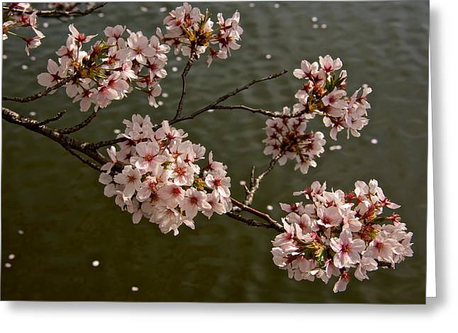 Spring Blossoms Greeting Card by Kathi Isserman