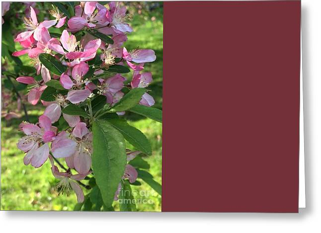 Spring Blossoms - Flower Photography Greeting Card