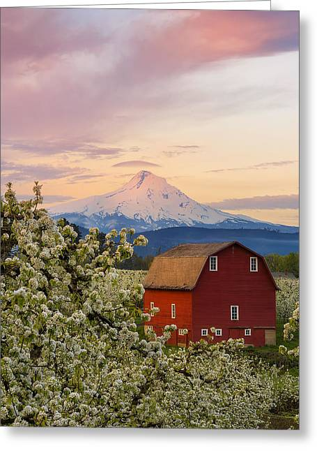 Spring Blossoms Sunrise Greeting Card by Ryan Manuel