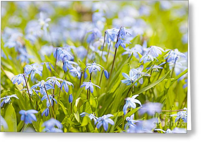 Spring Blue Flowers Greeting Card by Elena Elisseeva