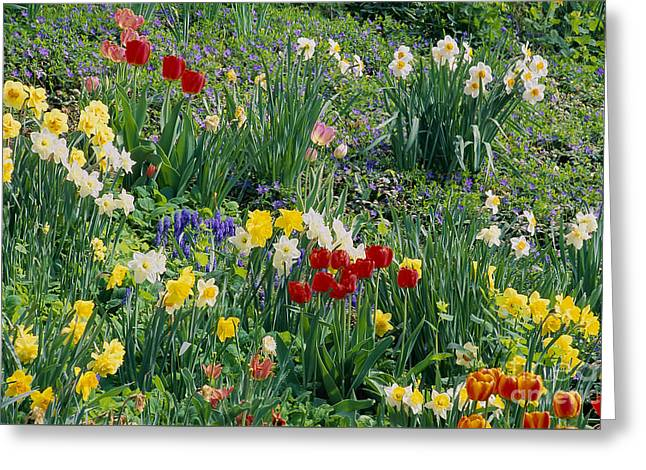 Greeting Card featuring the photograph Spring Bulb Garden by Alan L Graham