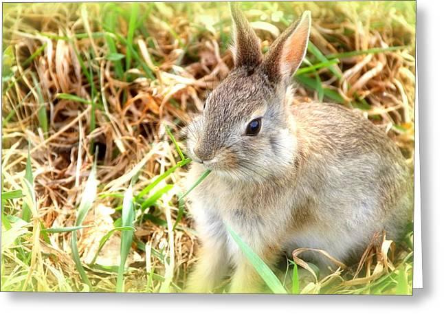 Spring Bunny Greeting Card