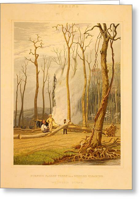 Spring--burning Fallen Trees In A Girdled Clearing--western Greeting Card by Litz Collection