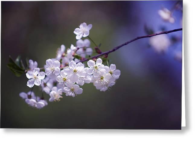 Spring Cherry Bloom Greeting Card