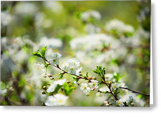 Spring Cherry Bloossom Greeting Card