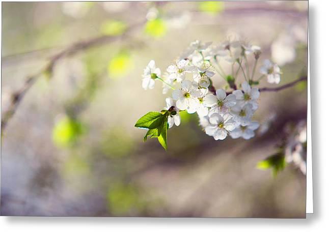 Spring Cherry Tree Greeting Card