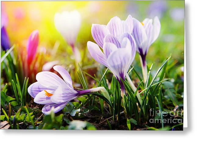 Greeting Card featuring the photograph Spring by Christine Sponchia