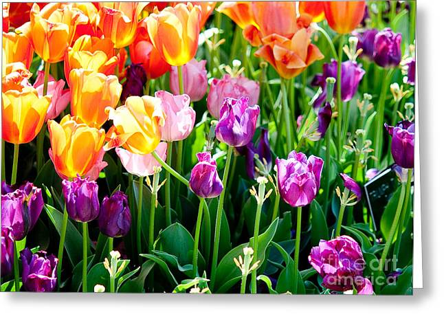 Spring Color Greeting Card by Shijun Munns