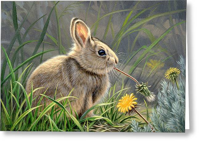 Spring Cottontail Greeting Card by Paul Krapf