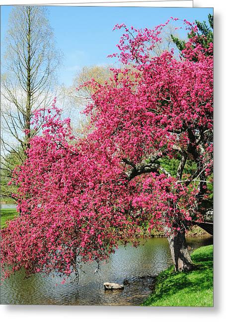 Spring Crabapple Greeting Card