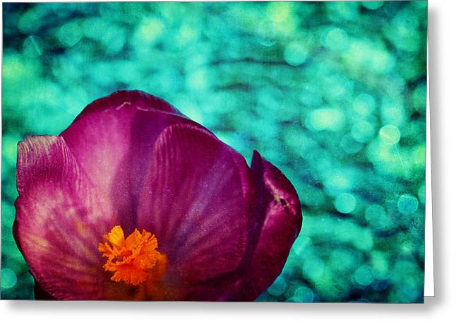 Greeting Card featuring the photograph Spring Crocus by Peggy Collins