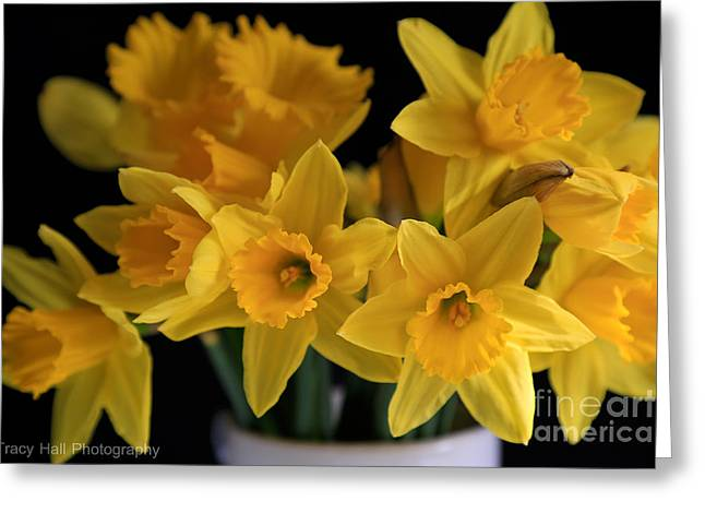 Spring Daffodils Greeting Card by Tracy  Hall