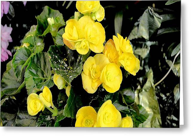 Greeting Card featuring the photograph Spring Delight In Yellow by Luther Fine Art
