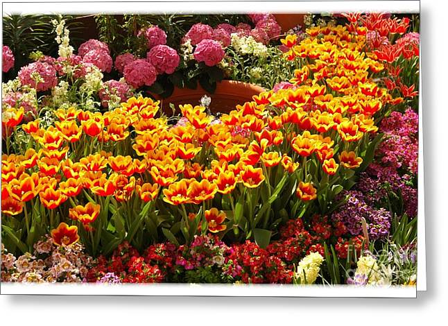 Spring Delight Greeting Card by Kathleen Struckle