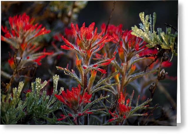 Spring Dew Paintbrush Greeting Card by Eric Rundle