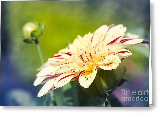 Spring Dream Jewel Tones Greeting Card