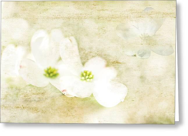 Spring Dreams Greeting Card