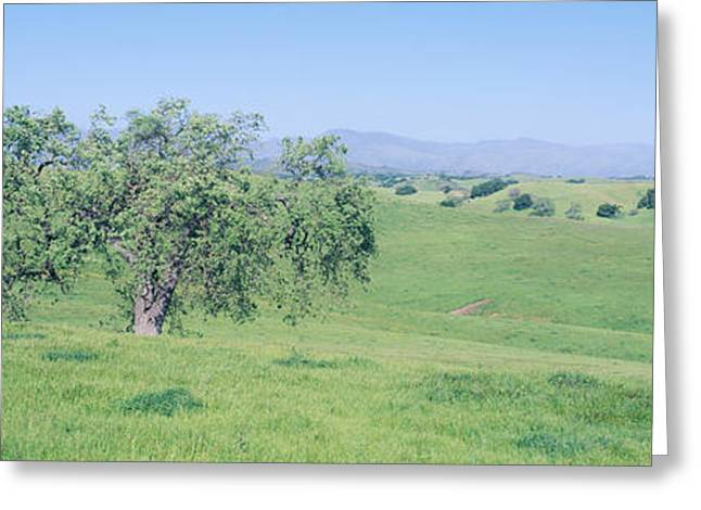 Spring Field, Santa Ynez Valley Greeting Card by Panoramic Images