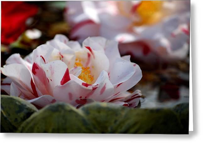 Spring Fling Greeting Card by Karen M Scovill
