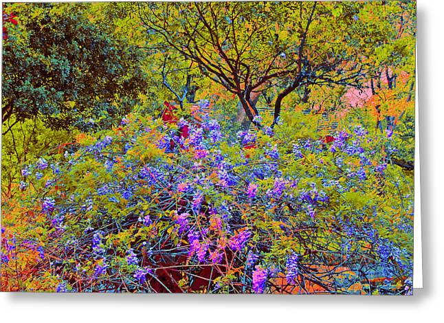 Spring Flowers At Zilker Botanical Gardens In Austin Texas Greeting Card By  Bill Blackmon