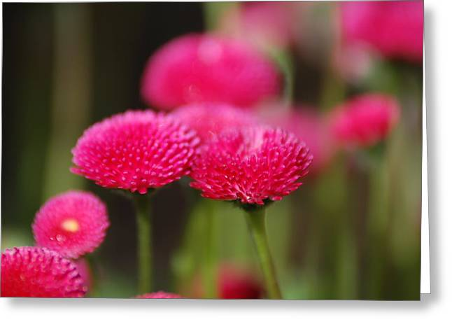 Spring Flowers Greeting Card by Ron Roberts