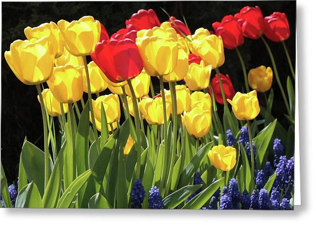 Spring Garden Sunshine Square Greeting Card by Carol Groenen