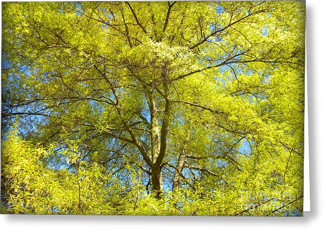 Spring Greening Greeting Card by Lorraine Heath