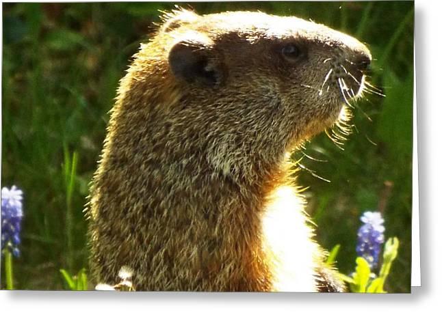 Spring Groundhog  Greeting Card by Lisa Roy