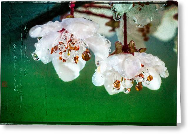 Spring Haiku Poetry With Cherry Blossoms And Dew Drops Greeting Card by Peter v Quenter