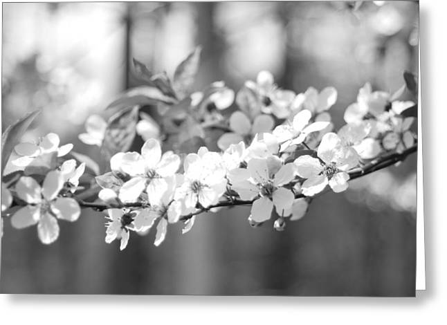 Spring Has Sprung Greeting Card by Barbara Bardzik