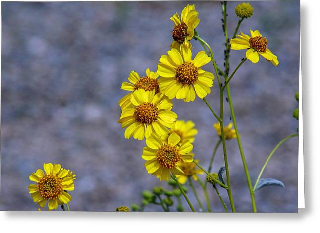Greeting Card featuring the photograph Spring Has Sprung by Elaine Malott