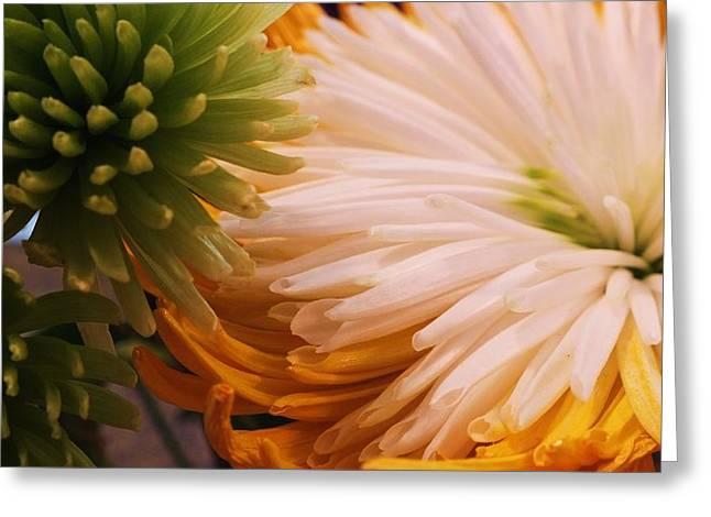 Spring Has Sprung II Greeting Card by Anna Villarreal Garbis