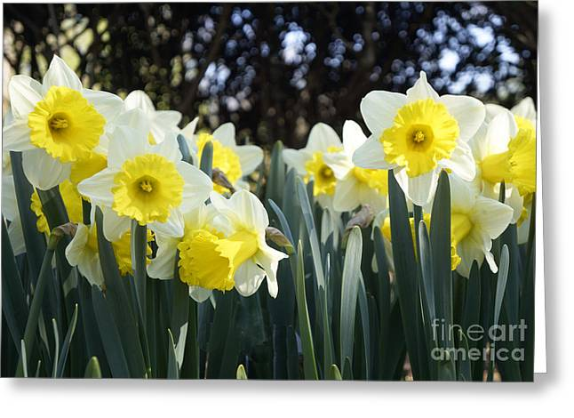 Spring Has Sprung Greeting Card by Rafael Quirindongo