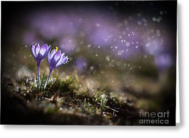 Spring Impression I Greeting Card by Jaroslaw Blaminsky