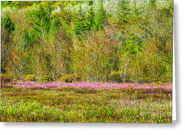 Spring In Acadia's Great Meadow Greeting Card by Susan Cole Kelly