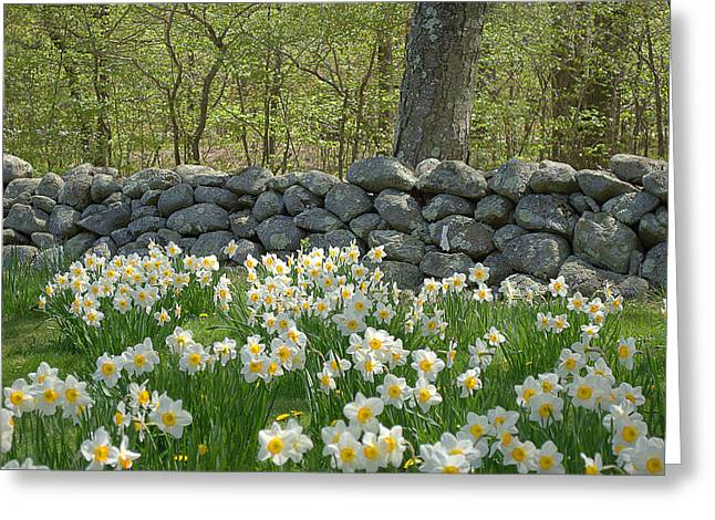 Spring In The Country Greeting Card
