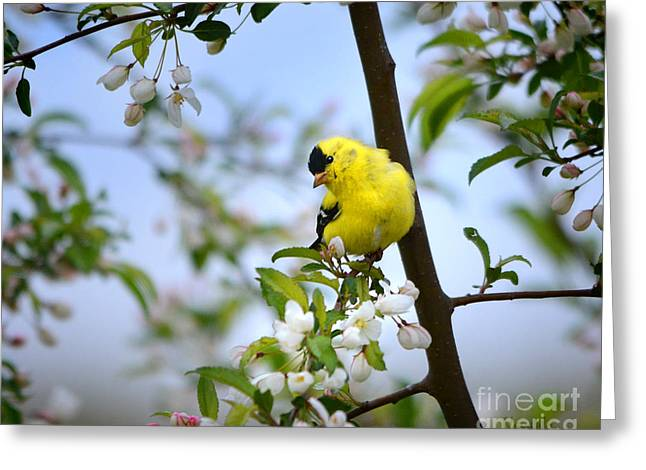 Spring In The Country Greeting Card by Nava Thompson