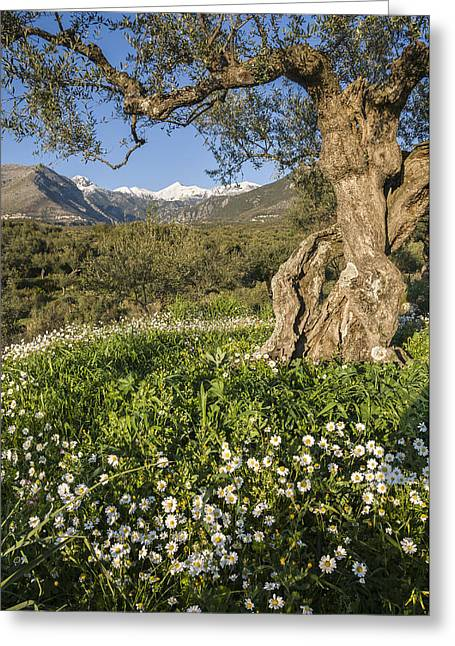 Spring In The Mani Greece Greeting Card by Peter Eastland