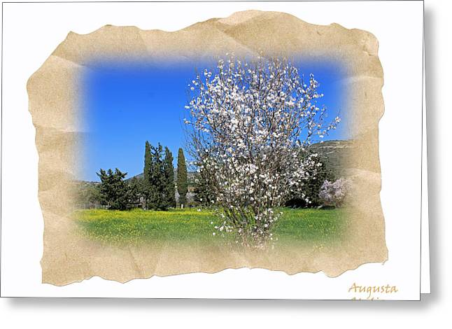Spring In The Paper Greeting Card by Augusta Stylianou