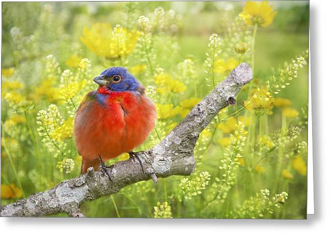 Spring Is A New Beginning Greeting Card by Bonnie Barry