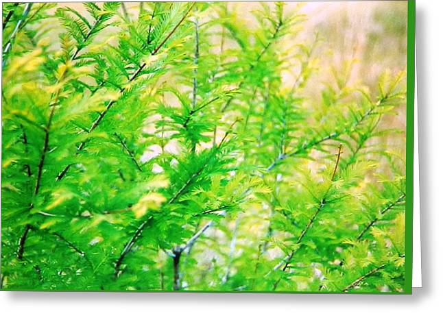 Spring Cypress Beauty Greeting Card